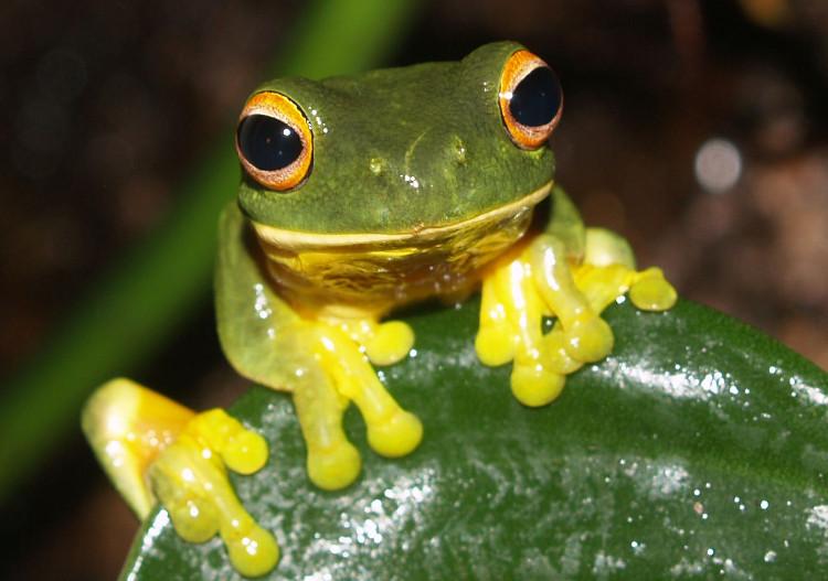 Nghiên cứu nước bọt loài ếch để tạo chất keo mới
