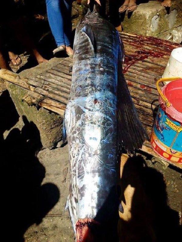 Ngư dân đánh bắt được cá lớn với những hoa văn bí ẩn trên mình cá