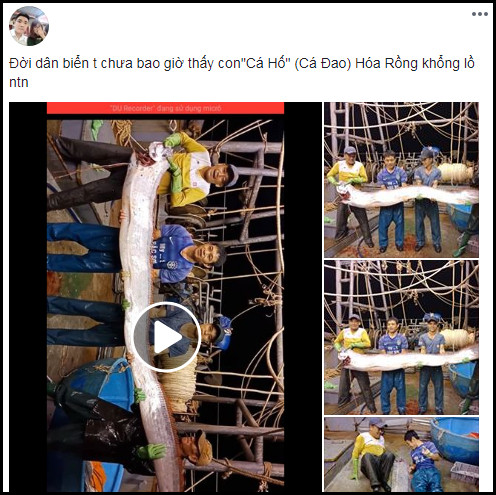 Ngư dân Thanh Hóa bắt được cá hố khủng dài hơn 4 mét, nặng gần 1 tạ?