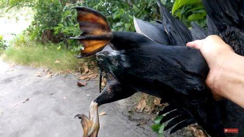 Người Sài Gòn bắt được chim cổ rắn quý hiếm nặng 1kg