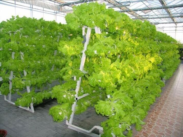 Nhà máy trồng rau không cần đất ở Trung Quốc
