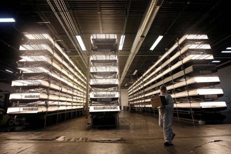 Nhà máy trồng rau: Không cần mặt trời, tiết kiệm 95% nước, năng suất cao