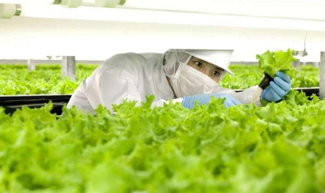 Nhật mở trang trại do robot làm chủ đầu tiên thế giới