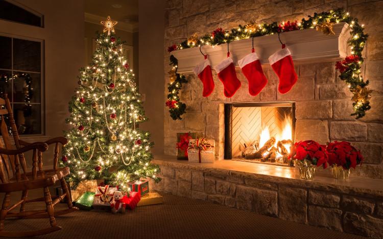 Nhiều người vô tư trồng cây thông Noel trong nhà mà không biết đến hậu quả này