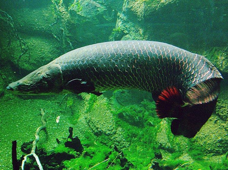 Những điều bạn chưa biết về cá hải tượng