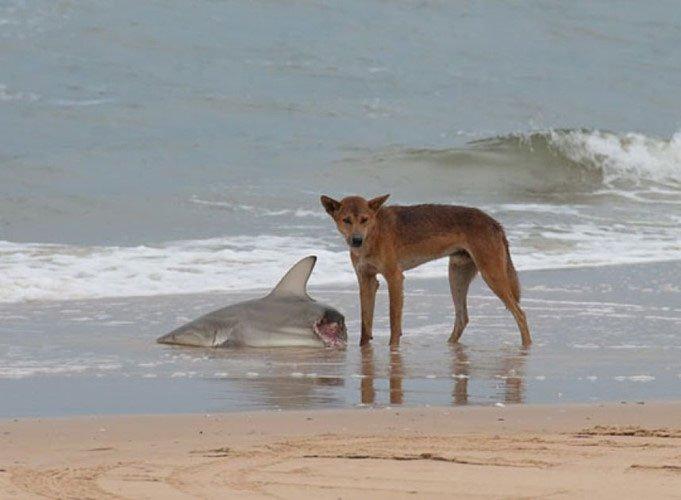 Những loài biến Australia thành nơi đáng sợ nhất thế giới