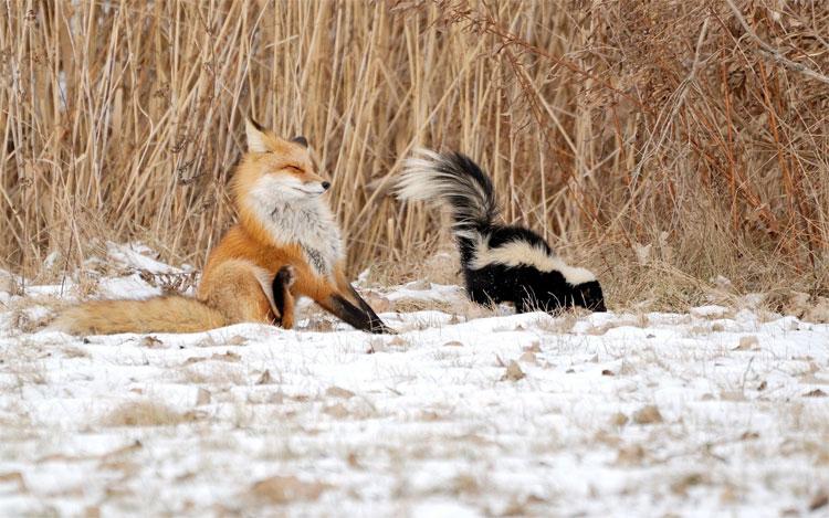 Những loài động vật có vú chứa chất độc