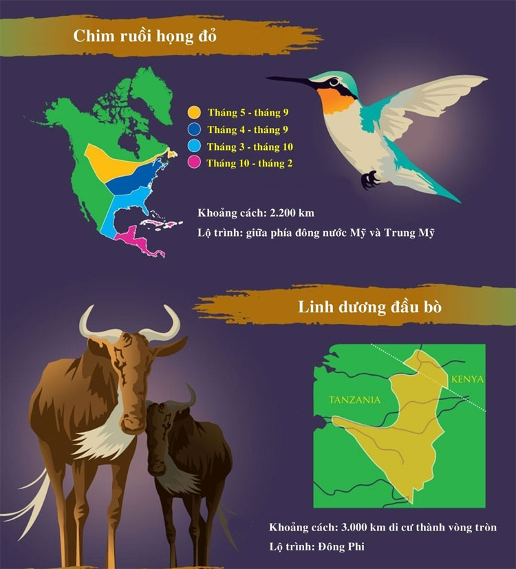 Những loài động vật di cư dài nhất trong tự nhiên
