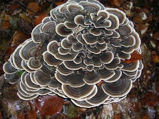 Những loài nấm kỳ lạ nhất thế giới