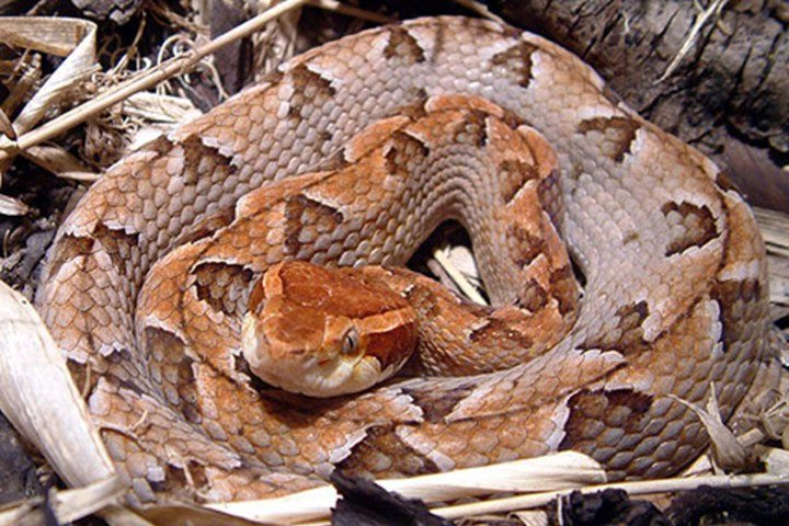 Những loài rắn độc ở Việt Nam