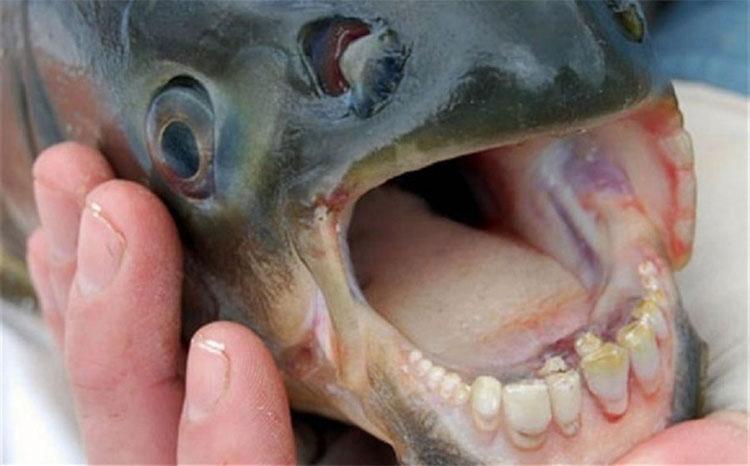 Những loài vật có miệng đáng sợ nhất