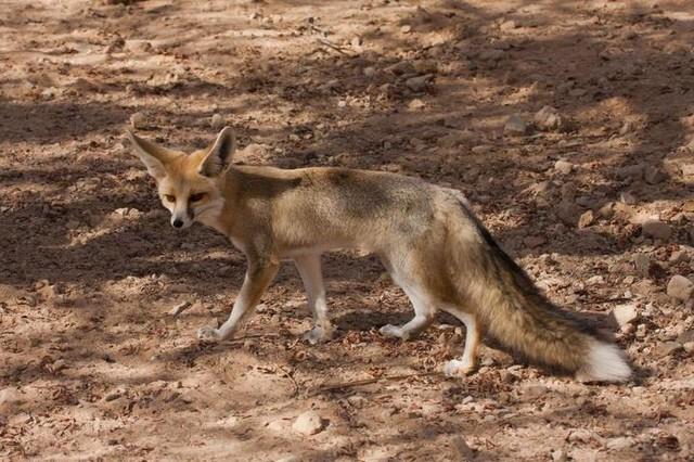 Những loài vật sống ở nơi nóng nhất thế giới
