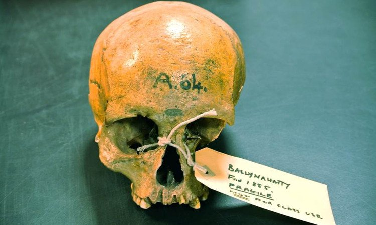 Những phát hiện lạ thường từ ADN cổ đại