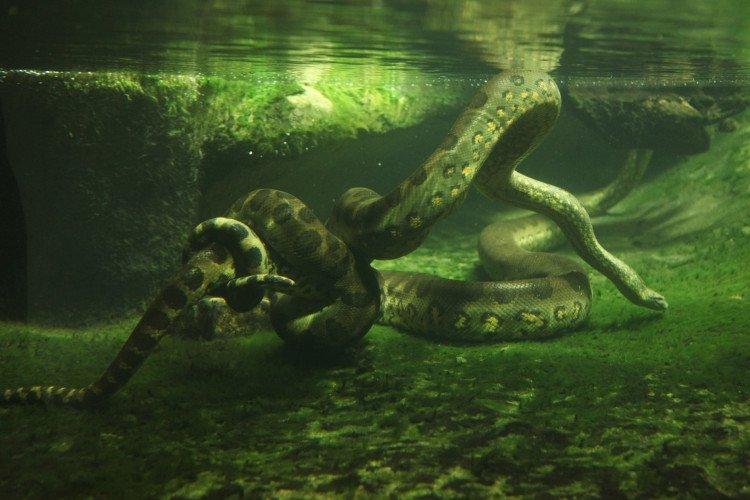 """Những """"quái vật"""" khát máu ẩn náu trong rừng rậm Amazon"""