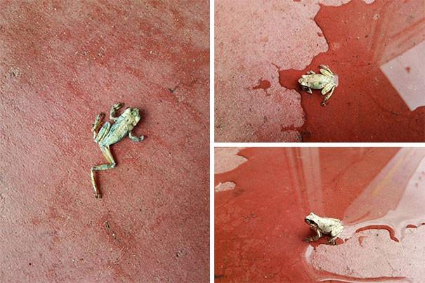 Những tấm ảnh này cho bạn thấy thiên nhiên chưa bao giờ đáng sợ đến như vậy