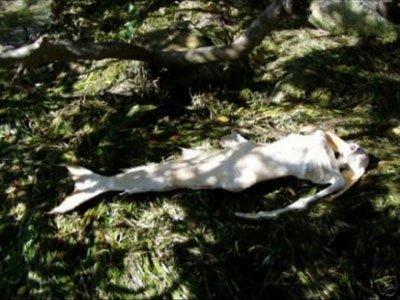 Những xác chết dị hợm của nàng tiên cá