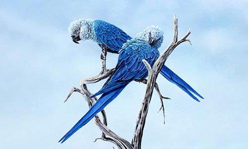 Nỗ lực hồi sinh loài vẹt tuyệt chủng ngoài tự nhiên