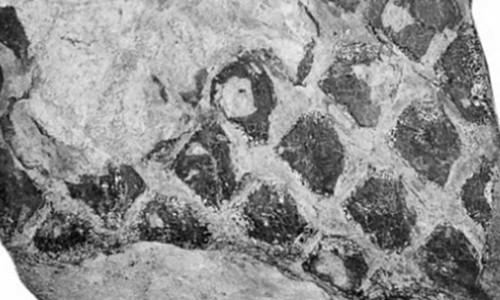 Nông dân Trung Quốc phát hiện dấu vết giống rồng đen trên đá