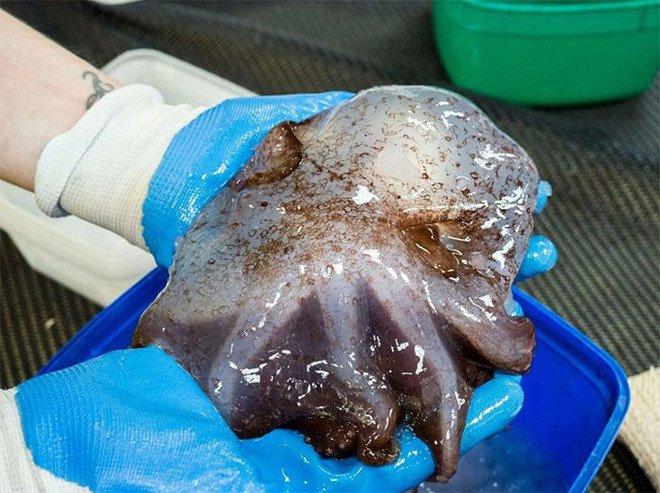 Ở độ sâu gần 5000m, đại dương ẩn chứa những sinh vật như bước ra từ phim kinh dị
