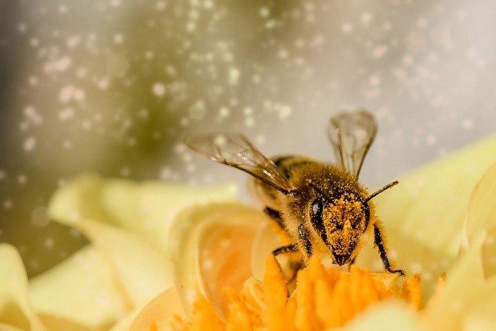 Phát hiện bằng chứng loài ong hiểu được số 0 nhỏ hơn số 1?