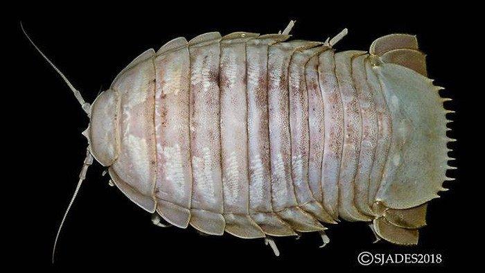Phát hiện các sinh vật ngoài hành tinh dưới đáy biển Indonesia