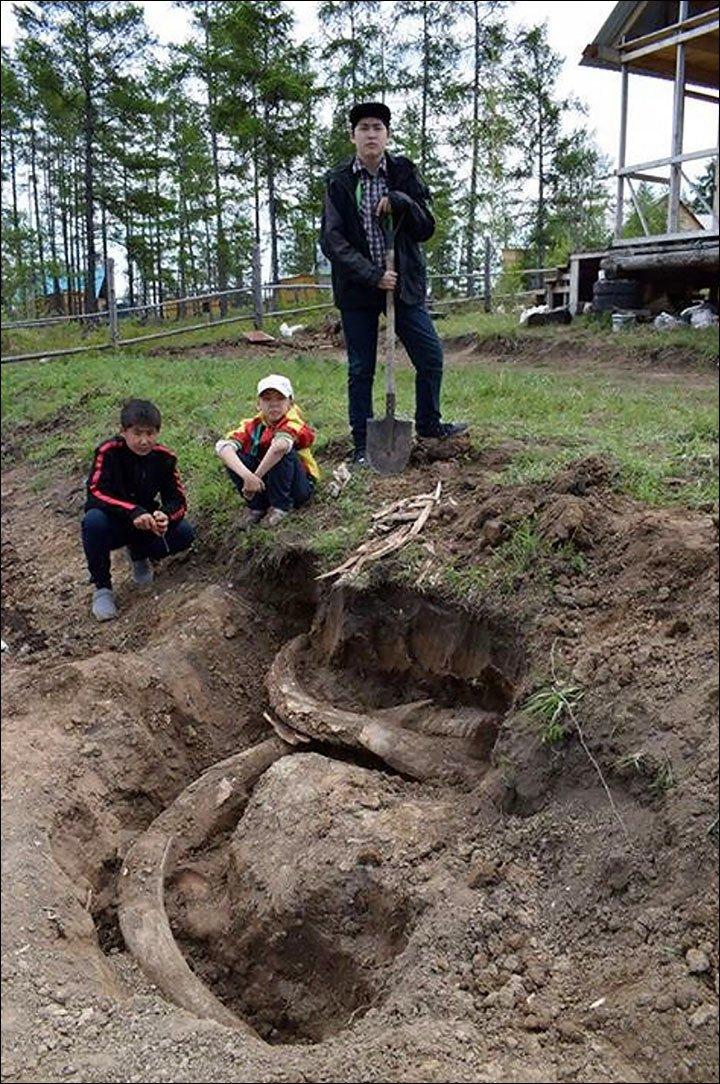 Phát hiện cặp ngà voi ma mút 400.000 năm tại Siberia