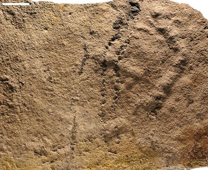 Phát hiện dấu chân động vật hóa thạch cổ nhất từ trước tới nay