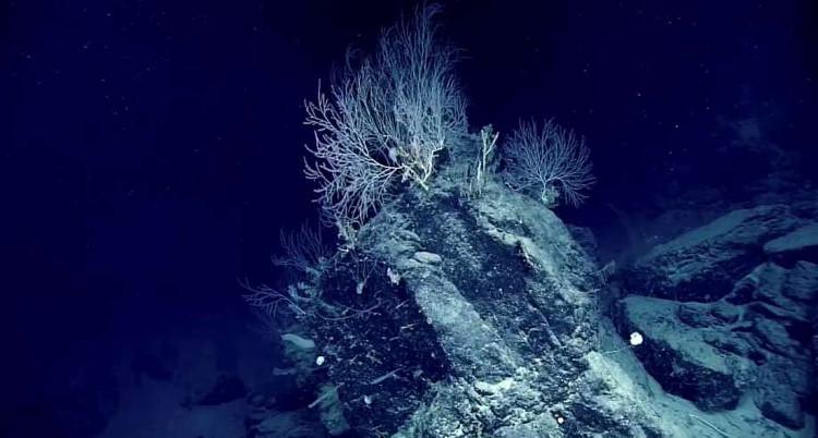 Phát hiện khu rừng san hô bí ẩn hơn 1000 tuổi, sâu 2.300m dưới đáy biển