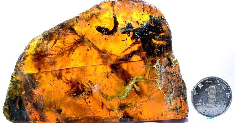 Phát hiện kinh ngạc về xác con chim 100 triệu năm tuổi trong hổ phách