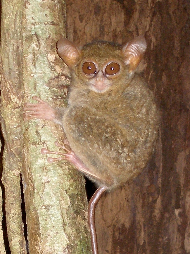 Phát hiện loài khỉ được mệnh danh yêu tinh rừng rậm, có thể xoay đầu 360 độ