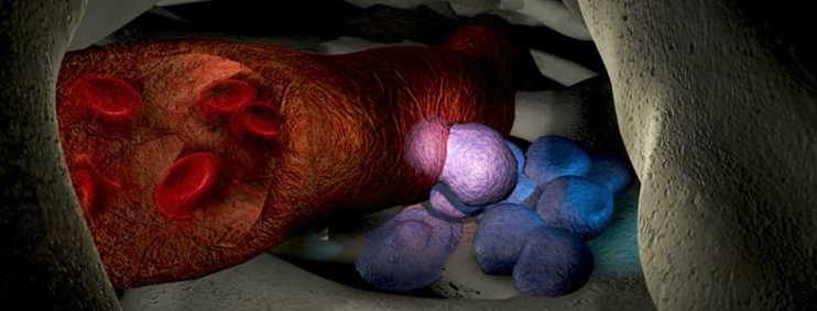 Phát hiện phân tử giúp trích xuất tế bào gốc phục vụ chữa trị ung thư máu