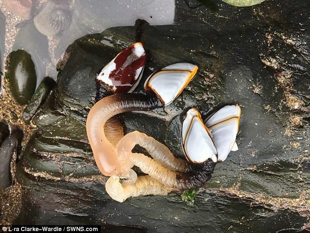 Phát hiện sinh vật biển kỳ dị trên bờ biển Anh