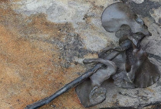 Phát hiện tàn tích của cuộc chiến tranh bộ lạc man rợ ở châu Âu
