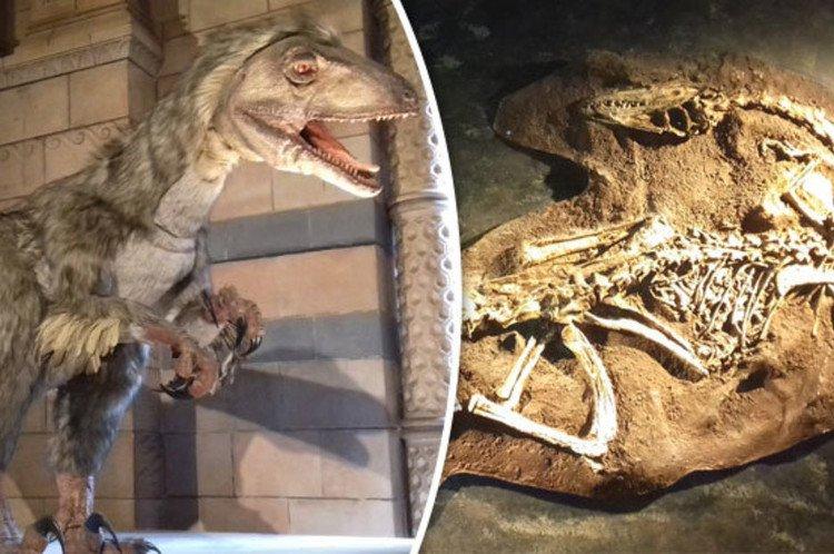 Phát hiện xác sinh vật thời nay giống khủng long 65 triệu năm trước