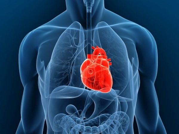 Phát triển thành công tim con người từ tế bào gốc, đập như bình thường