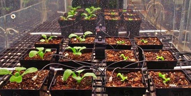 Phi hành gia sắp được ăn rau xanh trồng ngoài không gian