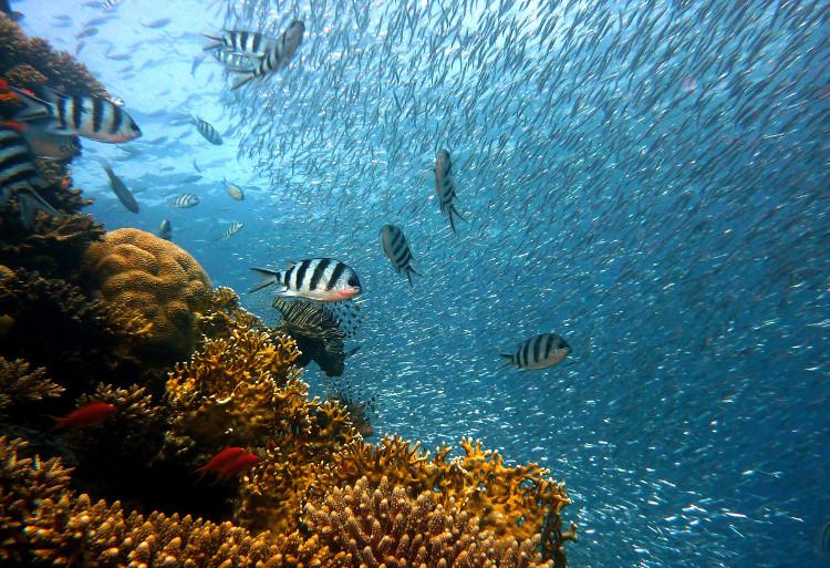 Phục hồi những rạn san hô chết bằng công nghệ in 3D