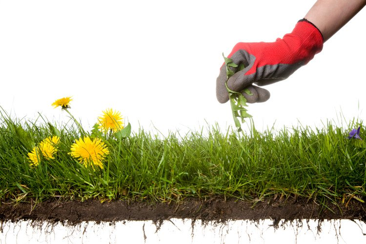 Phương pháp diệt cỏ dại không dùng chất hóa học