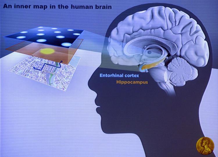 Phương pháp nâng cấp não bộ nhờ rèn luyện kỹ năng đọc