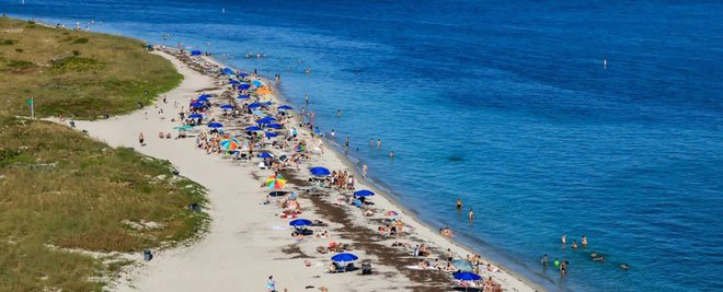 Quái vật tí hon ăn thịt người xâm chiếm nhiều bãi biển Mỹ