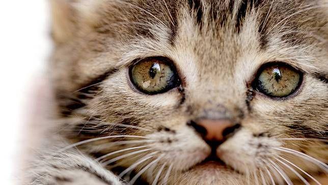 Râu - bộ phận không thể thiếu trên cơ thể mèo
