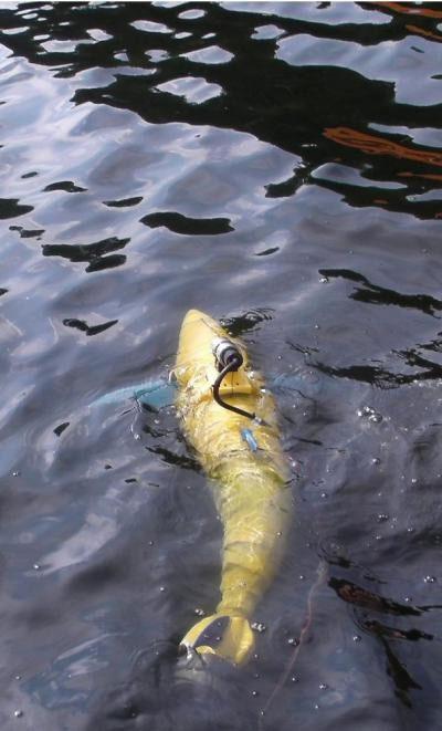 Robot mô phỏng hình dáng loài cá ngừ