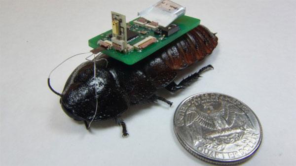 Robot sinh học sẽ được dùng để tìm người sau thảm họa
