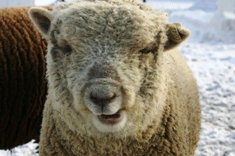 Rơi nước mắt những động vật bị hội chứng Down