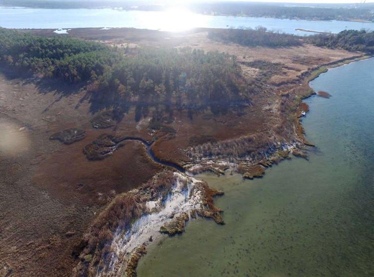 Rừng ma lan nhanh tại Bắc Mỹ do biến đổi khí hậu