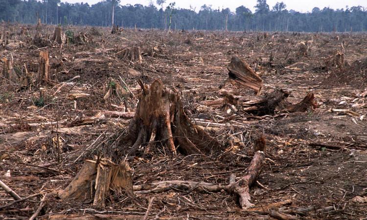 Rừng rậm Amazon đối mặt với án tử