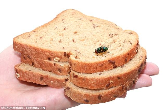 Ruồi đậu lên bánh và bạn tiếp tục ăn? Tin tôi đi bạn sẽ không bao giờ dám làm điều đó nữa