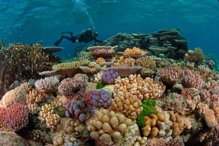 San hô là động vật hay thực vật?