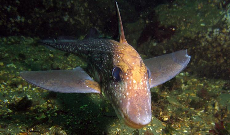 Sinh vật trong bức hình Quái vật alien dưới đáy biển không hề là giả tưởng