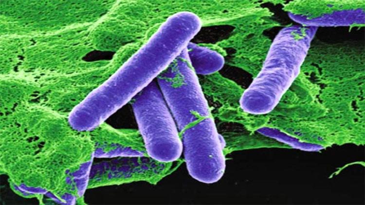 Sự nguy hiểm của vi khuẩn Clostridium botulinum